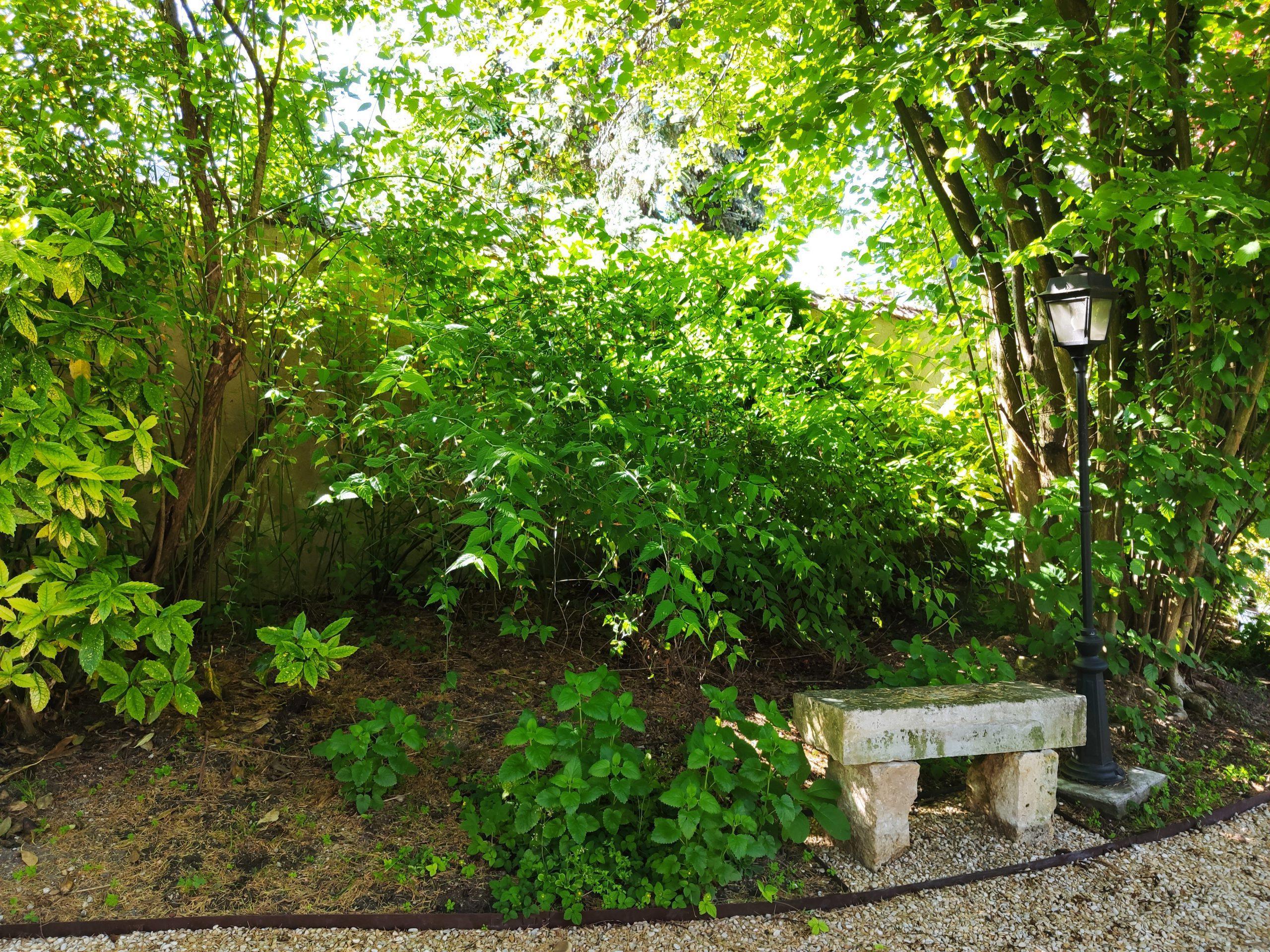 Avant création jardin